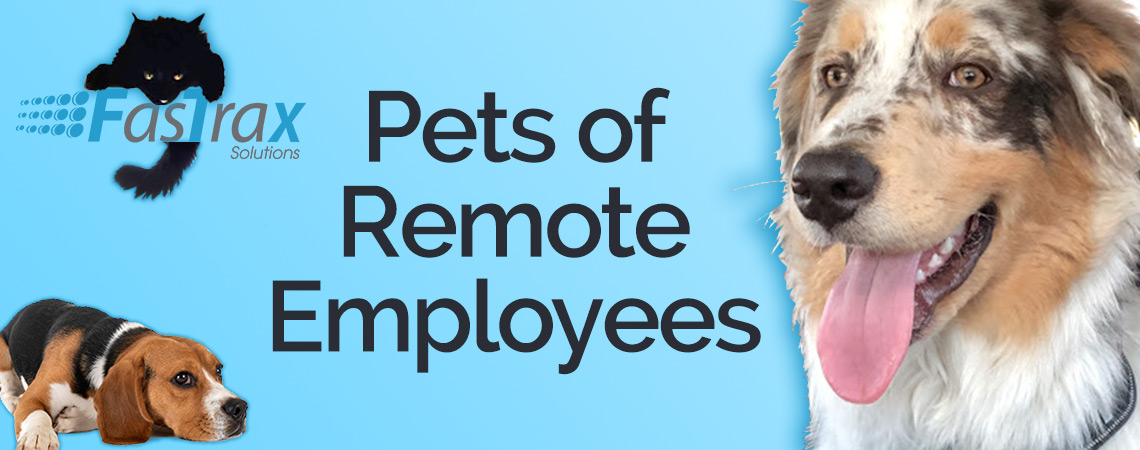 THE PETS OF FASTRAX REMOTE WORKERS.jpg